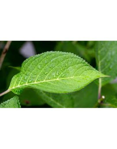 Chlorophyl vloeibare plantaardige wateroplosbare kleurstof groen 30 ml-Herbacos