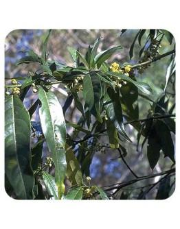 Litsea etherische olie-Herbacos 500 ml
