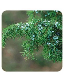 Jeneverbes Indië etherische olie-Herbacos 10 ml