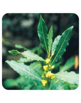Laurier blad etherische olie-Herbacos 5 ml