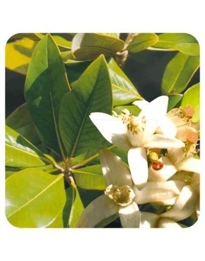 Oranjebloesem Neroli NID parfumolie-Herbacos 10 ml