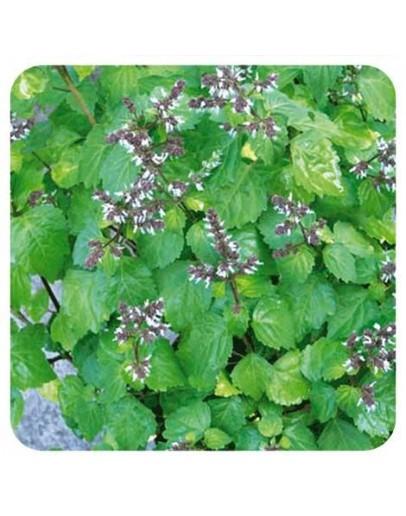 Patchouli etherische olie-Herbacos 10 ml