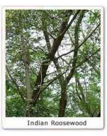 Rozenhout etherische olie-Herbacos 10 ml