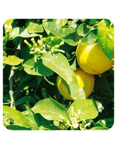 Bergamot FCF FuroCoumarine Free bio etherische olie-Sjankara 11 ml