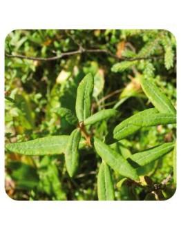 Moeraspalm wildpluk etherische olie-Sjankara 2,5 ml