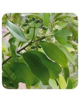 Indisch sandelhout wildpluk etherische olie-Sjankara 2,5 ml