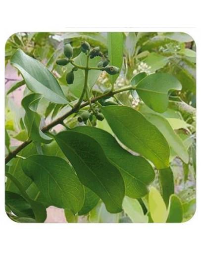 Indisch sandelhout wildpluk etherische olie-Sjankara 5 ml
