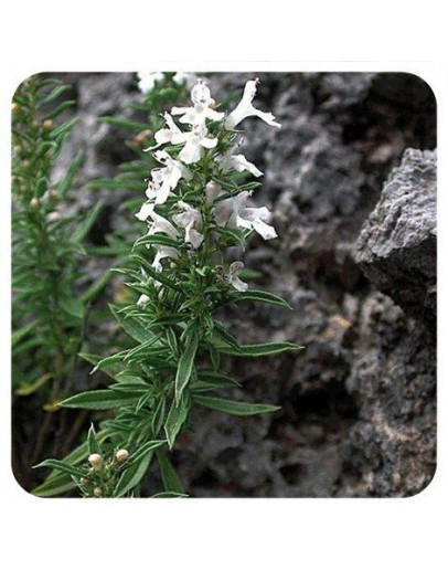 Berg bonenkruid bio etherische olie-Sjankara 11 ml