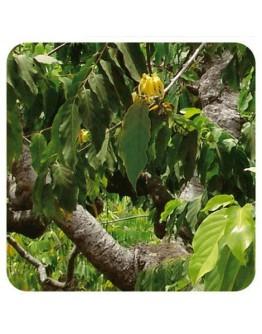 Ylang ylang extra bio etherische olie-Sjankara 11 ml