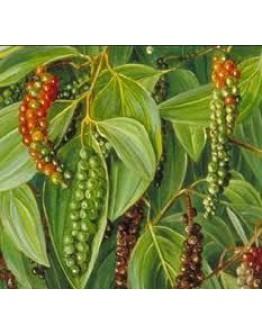 Zwarte peper bio etherische olie-Sjankara 11 ml
