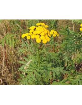 Boerenwormkruid etherische olie-Pranarôm 5 ml