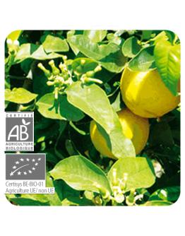 Bergamot bio etherische olie-Pranarôm 10 ml