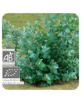 Eucalyptus globulus bio etherische olie-Pranarôm 10 ml