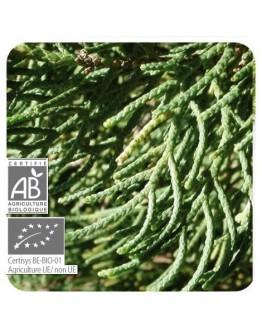 Cipres groenblijvende bio etherische olie-Pranarôm 5 ml