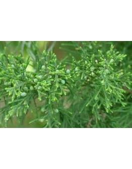 Virginische ceder wildpluk etherische olie-Sjankara 11 ml