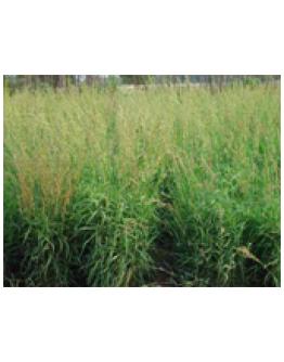 Palmarosa etherische olie-Vanhove 11 ml