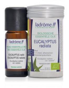 Eucalyptus radiata bio etherische olie-Ladrôme 10 ml