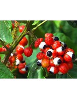 Guarana Poeder-Herbacos  100 g